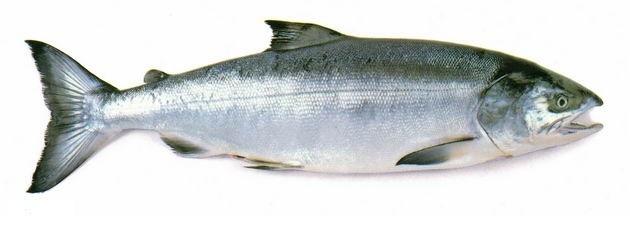 Продам рыбу Кету - АгроСервер ру